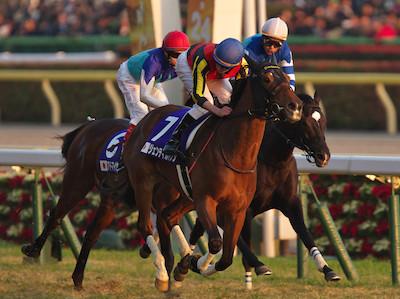 2014年のジャパンカップは最強牝馬を決める世紀の一戦になるぞ!