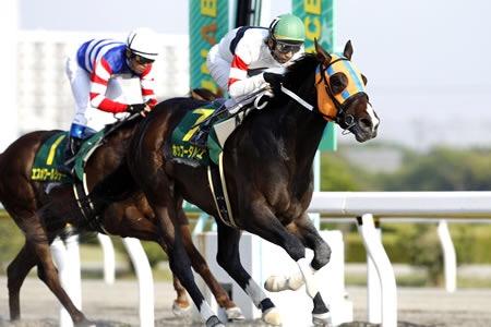 ホッコータルマエのG1制覇でさらに年度代表馬選び難しくなった!