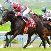 2013年の有馬記念は過去最高のドリームレースになるぞ!