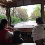 桜の季節に伏見の十石船は最高に綺麗です!